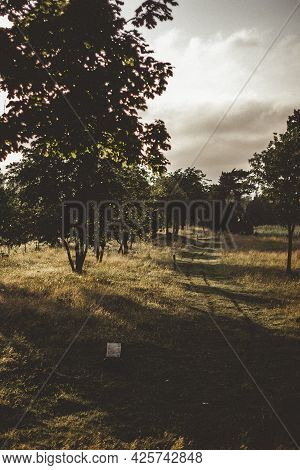 Beautiful Summer Landscape At Sunset With A Hiking Trail In The Meadow. Tracks Of Two Tires On The T