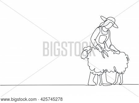 Single One Line Drawing Of Young Female Farmer Was Carefully Shearing The Fleece Using Scissors. Far