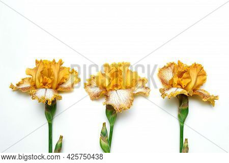 Three Yellow-brown Iris Flowers On White Isolated Background With Empty Space For Text, Copy Space,