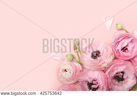 Tender Ranunculus Flowers In Flatlay On Pink Background With Copy Space. Bunch Of Persian Buttercup