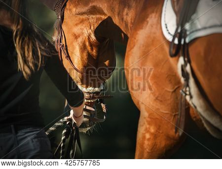 A Horse Breeder In Black Clothes Leads A Sorrel Saddled Horse On The Lead Rope, Illuminated By Sunli