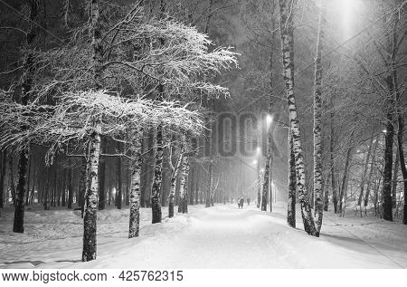 Snowstorm In The City Birch Park In The Evening Black And White