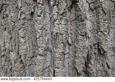 Natural Aged Tree Bark Background With Rich Texture In Gray, Beige And Earthy Colors