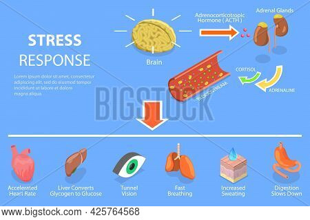 3d Isometric Flat Vector Conceptual Illustration Of Stress Response Process, Fight Or Flight Physiol