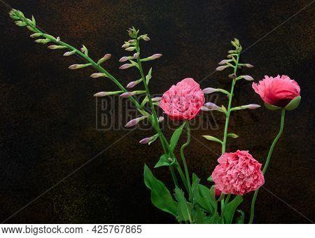 Poppy Flower Buds Helen Von Stein On A Dark Background With Copy Space, Close Up