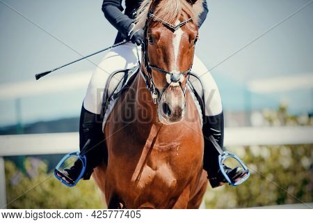 Equestrian Sport. Portrait Sports Red Stallion In The Bridle. The Leg Of The Rider In The Stirrup, R