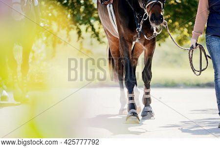 Feet Running Sports Red Horse. Legs Of A Sporting Savvy Horse In Knee-caps. A Sports Horse Walks Aft