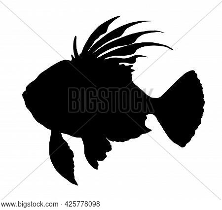 Isolated Vector Element Of John Dory From A Black Silhouette Side View With Spread Fins And Tail. A
