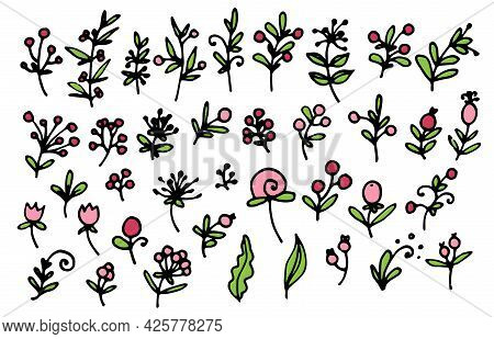 A Set Of Vector Cute Twigs Of Red And Pink Berries And Flowers, With Green Leaves With A Black Outli