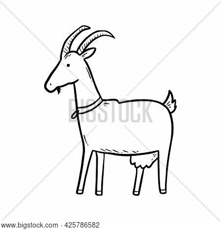 Hand Drawn Farm Animal Goat. Doodle Sketch Style. Drawing Line Simple Goat Icon. Isolated Vector Ill