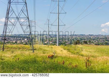 Colorado Living. Centennial, Colorado - Denver Metro Area Residential Panorama With Power Lines And
