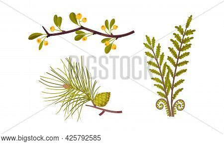 Fir Branch And Berry Twig As Forest Botany Element Vector Set