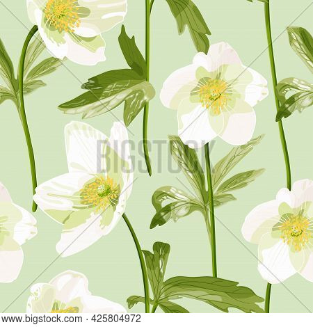 Anemone Canadensis. Seamless Pattern With White Anemone Flowers In Pastel Colors. Delicate White Wil