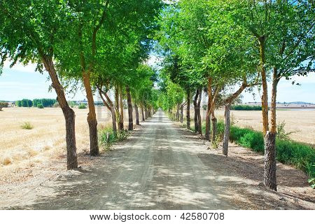 A Corridor Of Trees In The Tunnel.