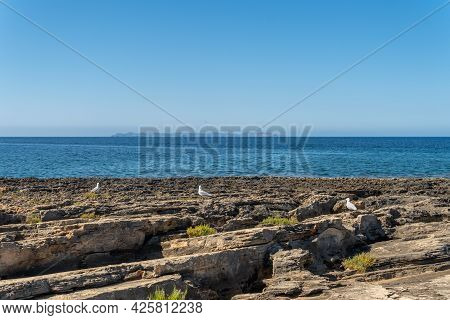 Rocky Coast With Seagulls Of The South Of The Island Of Mallorca At Sunrise With The Island Of Cabre