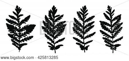 Black Leaves Silhouettes Of Grass Isolated On White Backdrop. Autumn Fallen Field Grass Leaves. Sten