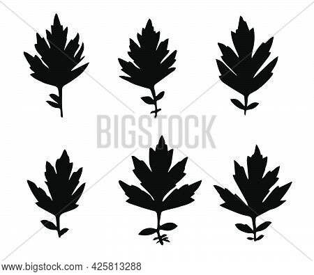 Black Silhouettes Of Grass Leaves Isolated On White Background. Autumn Fallen Field Grass Leaves. St