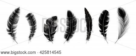 Realistic Black Feathers. Birds Feather, Quill Swan Or Crow Plumage Elements. Decorative Isolated Fl