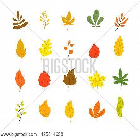 Autumn Leaves Collection. Tree Leaf Fall, Flat Marple Yellow Orange Foliage. Season Forest Icons, Is