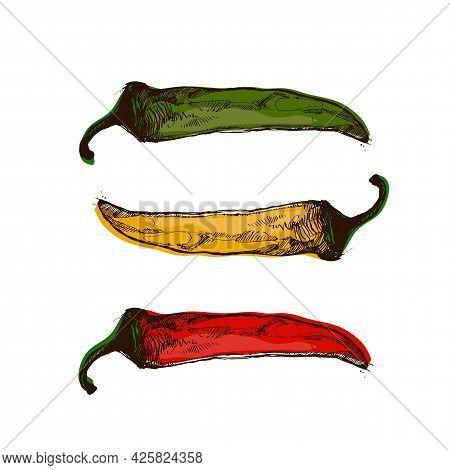 Hot Chilli Peppers T-shirt Design, Vector Art