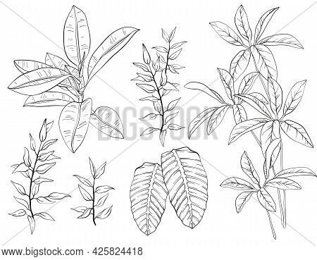 Ficus, Palm Leaves And Tropical Plants Set, Tropical Foliage, Branch, Greenery. Black And White Vect
