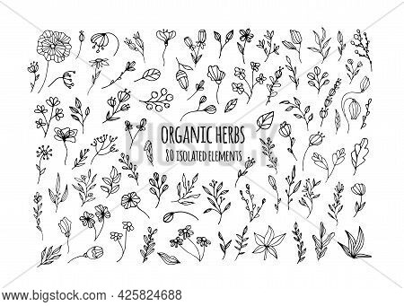 Vector Organic Herbs. Set With Herbs, Flowers, Ayurvedic Plants, Twigs. Design Of Fabrics, Dishes, A