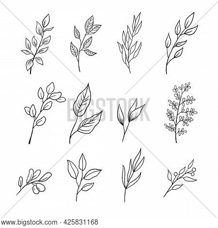 Set Of Sprigs With Leaves. A Collection Of Different Leaves On Branches In Outline Style. Vector Ill
