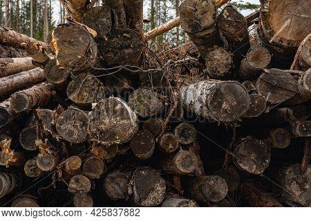 Log Piles, Logging. Harvesting Tree Trunks In The Forest.