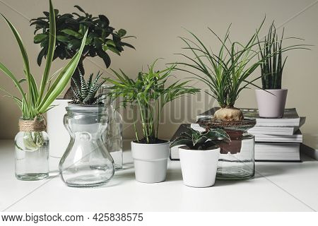 Various Indoor Mini Plants In Pots And Glass Jars On A White Shelf, Home Gardening And Home Mini Jun