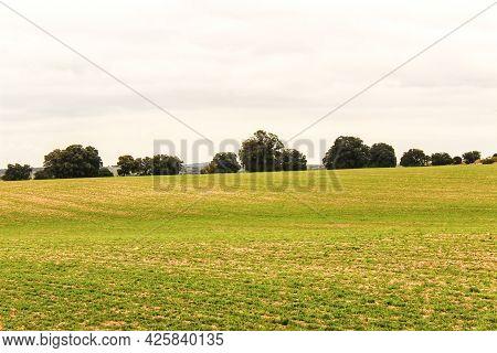 Green Meadow Landscape With Oak Trees Under Cloudy Sky In Castilla La Mancha, Spain