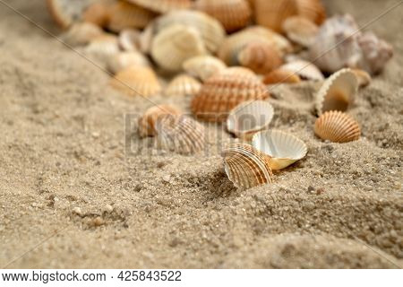 Scallop Shells Scattered On Sandy Beach, Marine Holiday Background