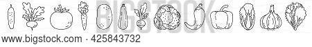 Vegetable Sketch. Cucumber, Turnip, Tomato And Carrot. Potato, Zucchini, Radish And Cauliflower. Pep