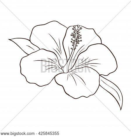 Hand Drawn Tropical Organic Hibiscus Flower. Line Art Exotic Flower Illustration For Logo, Emblem, T