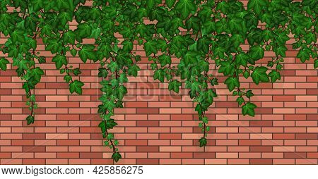 Ivy On Brick Wall. Climbing Ivy Foliage And Hanging Green Liana On Red Brick House Wall Or Garden Fe
