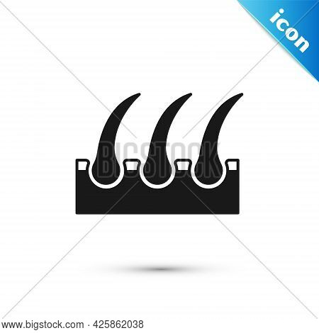 Grey Human Hair Follicle Icon Isolated On White Background. Hair Care Treatment. Vector