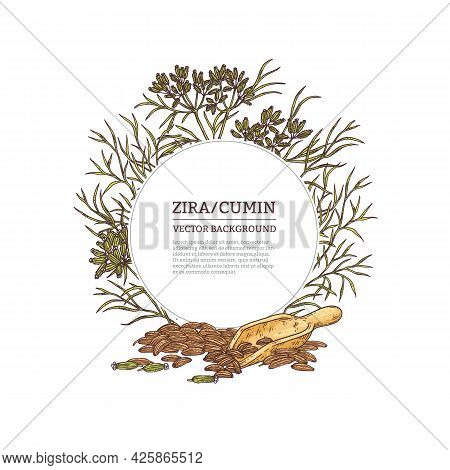 Hand Drawn Decorative Frame With Zira Or Cumin, Vector Illustration Isolated.