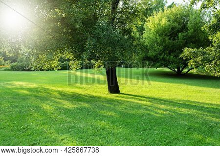 Beautiful Park Landscape With Lawn And Trees. Manicured Lawn And Trees In The Botanical Garden In Th