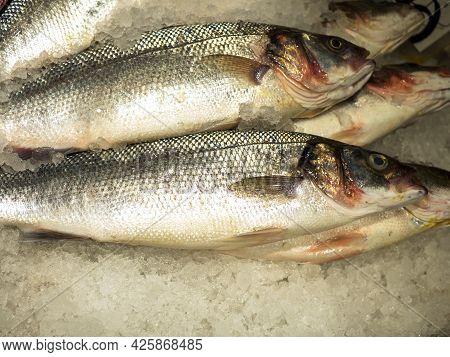 Close-up Of Sea Bass Fish Atractoscion Nobilis Lying On Crushed Ice
