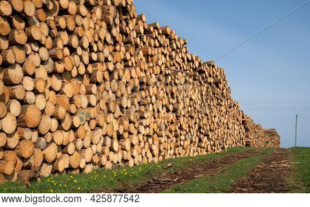 Panoramic Image Of Footpath Alongside Log Piles, Forestry In Germany