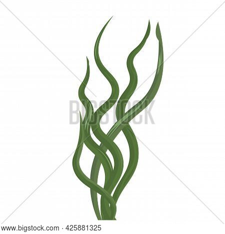 Kelp Algae Vector Stock Illustration. Green Sea Cabbage Leaves. Laminaria. An Underwater Plant Of Th