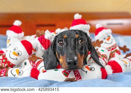 Portrait Of Lovely Puppy Lying In Bed, Toys In Shape Of Snowmen Scattered Around And Piled On Pet. G