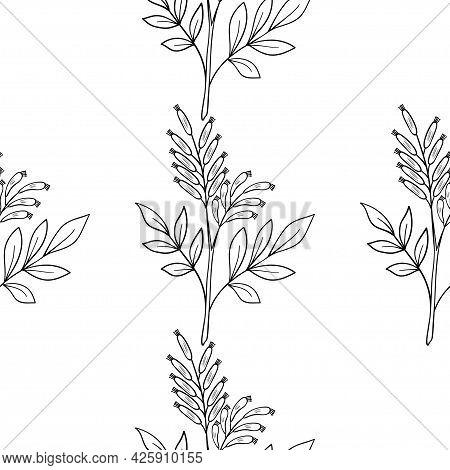 Bitter Wood, Seamless B-w Dd Ww Herb