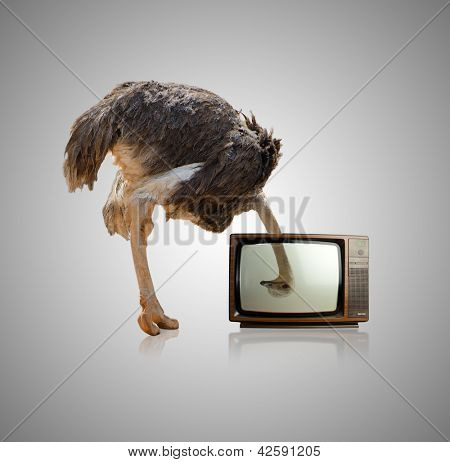 Ostrich Looking Through Television On Gray Background poster