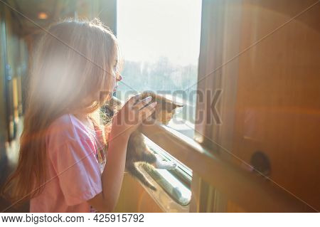 A Girl Is Riding In A Compartment Carriage With A Kitten. Traveling With Animals By Train. A Child W