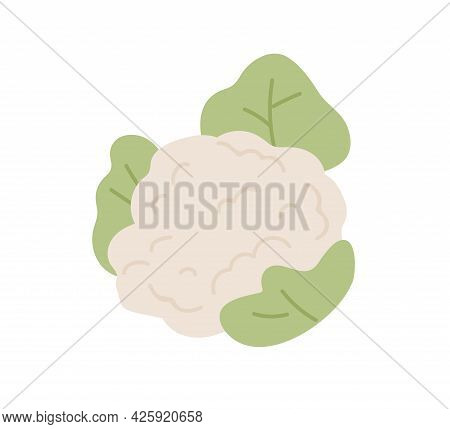 Fresh Raw Cauliflower With Leaf. Healthy Food Plant. Icon Of Vegetable With Leaves. Colored Flat Vec