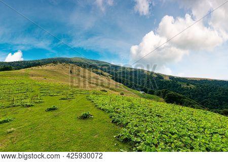 Countryside Landscape Of Carpathian Mountains In Ukraine, Europe. Green Meadow Under Blue Sky. Trees