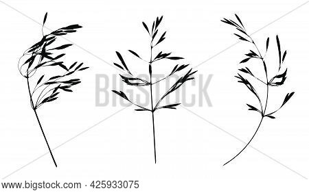 Black Cereal Grass Leaves Silhouettes Isolated On White. Autumn Fallen Field Grass Leaves. Stencil V
