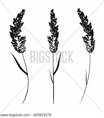 Black Cereal Grass Silhouettes Isolated On White. Autumn Fallen Field Grass Leaves. Stencil Vector
