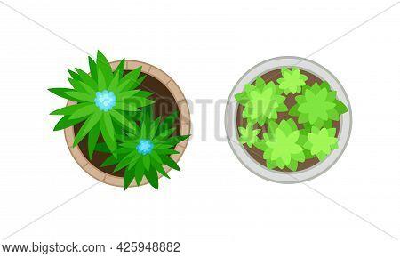 Bush Growth As Landscape Elements Above View Vector Set