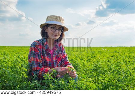 Middle Age Caucasian Female Farm Worker Inspecting Medicago Field Summer Time